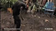Никога не давайте оръжие на маймуна!