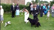 Куче Препикава Булка На Сватбената И Рокля ! - Смях
