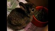 Опитомено диво зайче се храни.