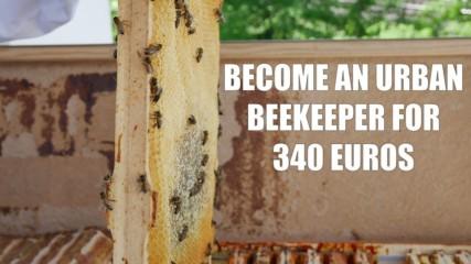 Bee Innovations: Balcony bee boxes in Berlin