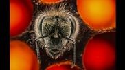 Вълнуващ поглед върху първите 21 дни от живота на пчелите