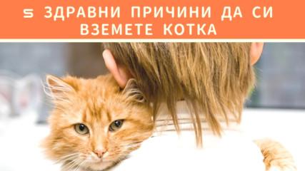 5 здравни причини да си вземете котка