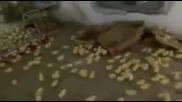 Я, елате пиленца при баткоо..