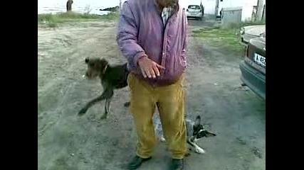 Лудо Куче Скача Като Кенгуру