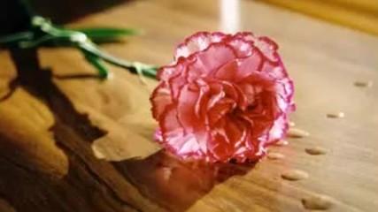 Himzo Polovina - Karanfile cvijece moje
