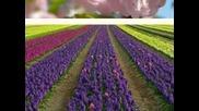 Пролет Иде ! Честита Първа Пролет !