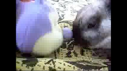 Моето Зайче