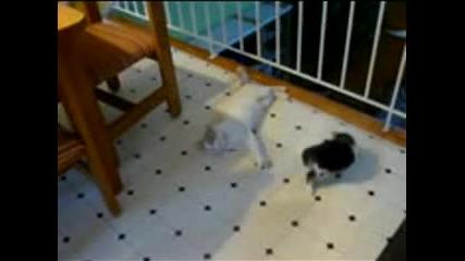 Забавни котенца