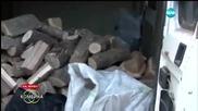 Дървената мафия в България