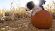 Сладки кученца празнуват Хелоуин