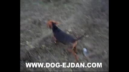 Kopoy 5 www.dog - ejdan.com