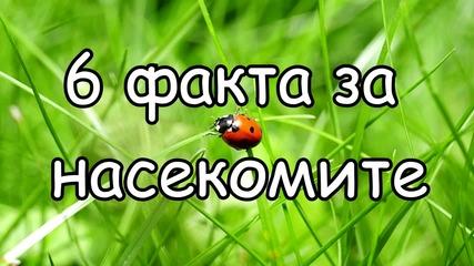 6 факта за насекомите