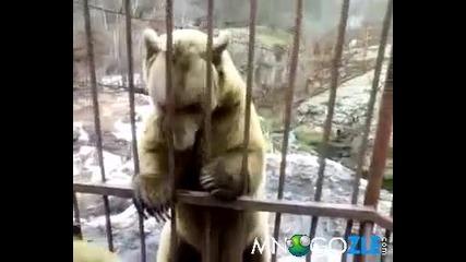 Срамежлива мечка