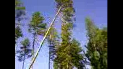падане на дърво - 1
