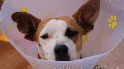 Кучета и котки след упойки (голям смях)