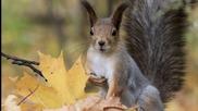 Есен е вече- детска песничка
