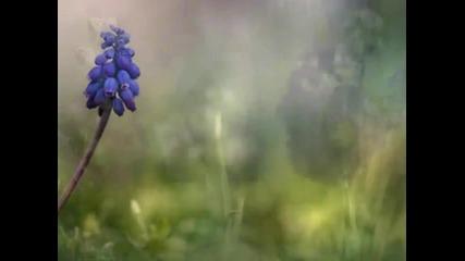 Диви цветя-р.клайдерман