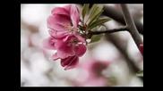 Japanese Spring - Karunesh