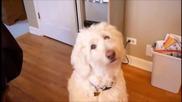 10 Doggie Head Tilts Compilation