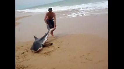 Човек спасява бяла акула