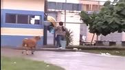 Videos Chistosos Y Graciosos - Cabra Loca Suelta