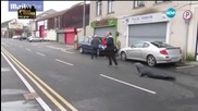 Тюлен блокира улица в ирландско градче, изнудва жителите за риба