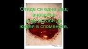 Stamatis Gonidis - Den Ehis Kardia - Превод