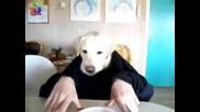 Куче рапър се храни с ръце Смях