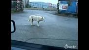 Куче влиза в ритъм с музиката:))