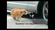 Котки се карат Гарантиран Смях