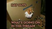 Снимки На Смешни Котки