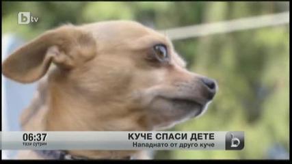 Куче стана герой в Канада