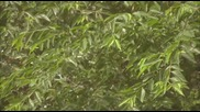 [бг субс] Sprout / Израстване - епизод 7