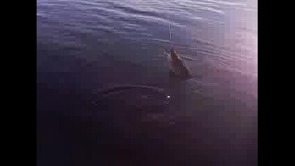 ribolov na shtuka