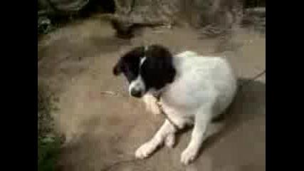 Сара - Кучето Ми
