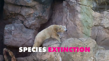 UN says a million species at risk of extinction... what now?