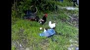 кокошка с малки пиленца