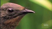 Птица имитира всякакви звуци!