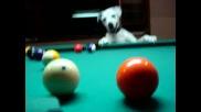 Невероятно куче играе билиард