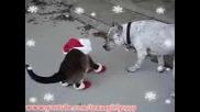 Котка Обута В Коледни Ботуши