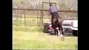 Алхантекински  кон -езда...