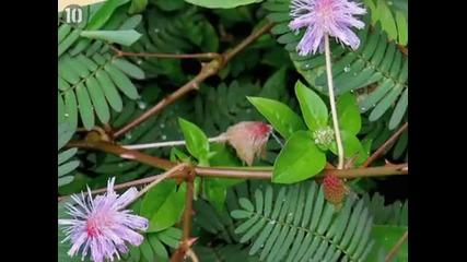 10те най-странни растения на света