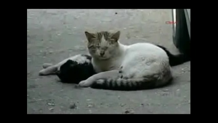 Коте не иска да напусне мътвото си приятелче
