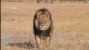Cecil the Lion -- Zimbabwe Says Dentist is a Criminal ... Extradition Already in Play