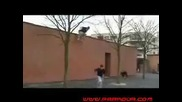 Лудаци на Parkour and Freerunning