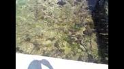 Морски таралежи в Гърция .