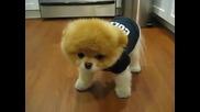 Най-сладкото кученце на света! - Боо