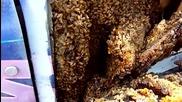 Мъж сваля калниците на джипа си и намира стотици пчели!