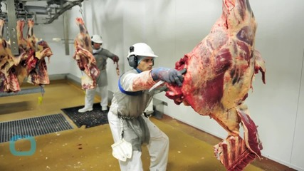 Dutch Prosecutors Demand 5-year Sentence for Meat Processer Accused of Selling Horse as Beef