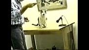 Котка Издава Смешни Звуци Докато Яде